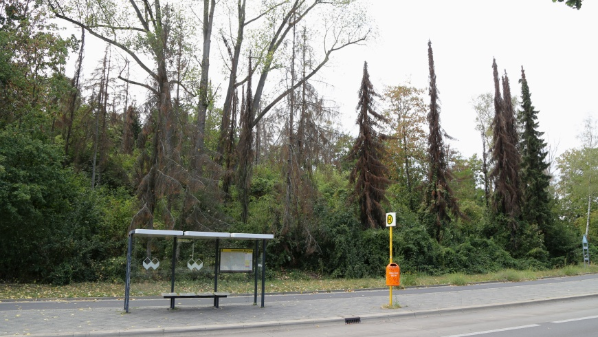 Waldsterben am Insulaner