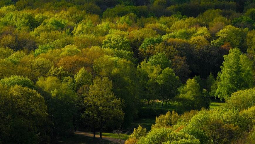 Dichter Parkbaum-Bestand in einem Berliner Park