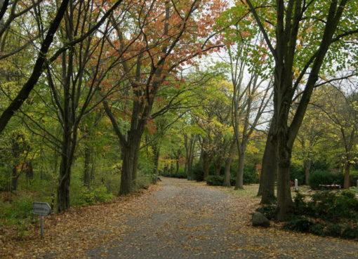 Parkfriedhof in Britz